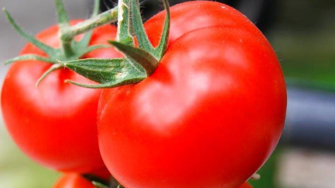 tomaten super food mit geschmack. Black Bedroom Furniture Sets. Home Design Ideas
