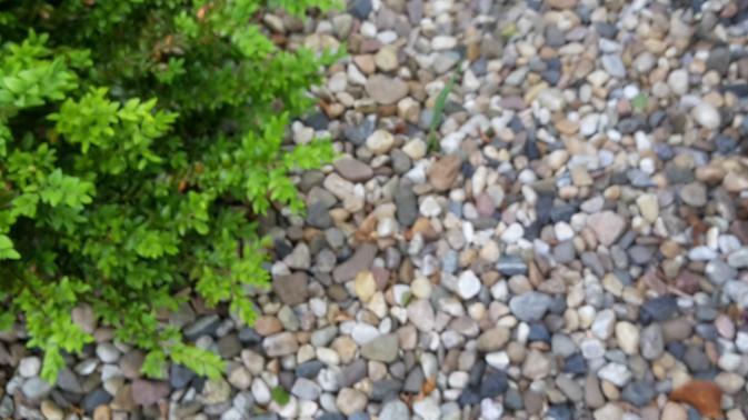 Stein Garten Ein Trauriger Trend Gabot De