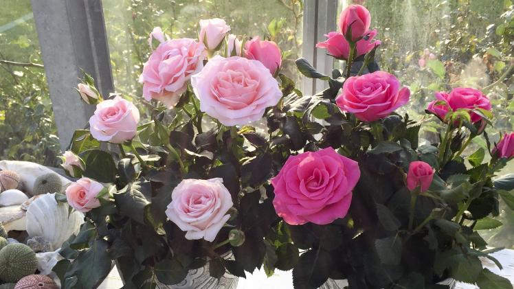 Pink Love Fragrance Forever und Rosa Love Fragrance Forever. Bild: Roses Forever.