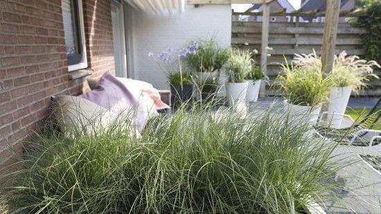 gmh f r jeden geschmack ist ein gras gewachsen. Black Bedroom Furniture Sets. Home Design Ideas