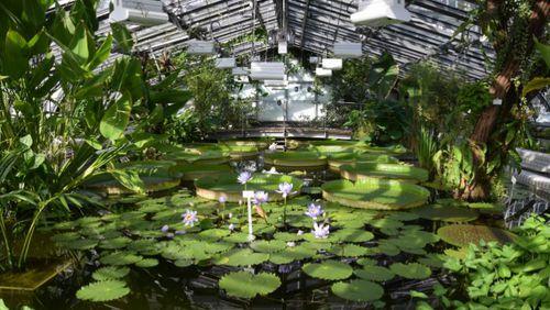 Botanischer Garten Berlin Victoriahaus Wieder Geoffnet Gabot De