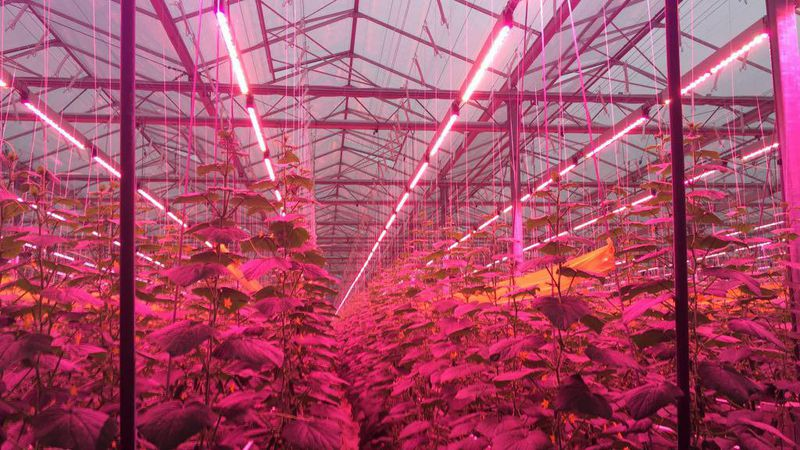Verhoeven: LED-Lampen für Snackgurken | Gabot.de