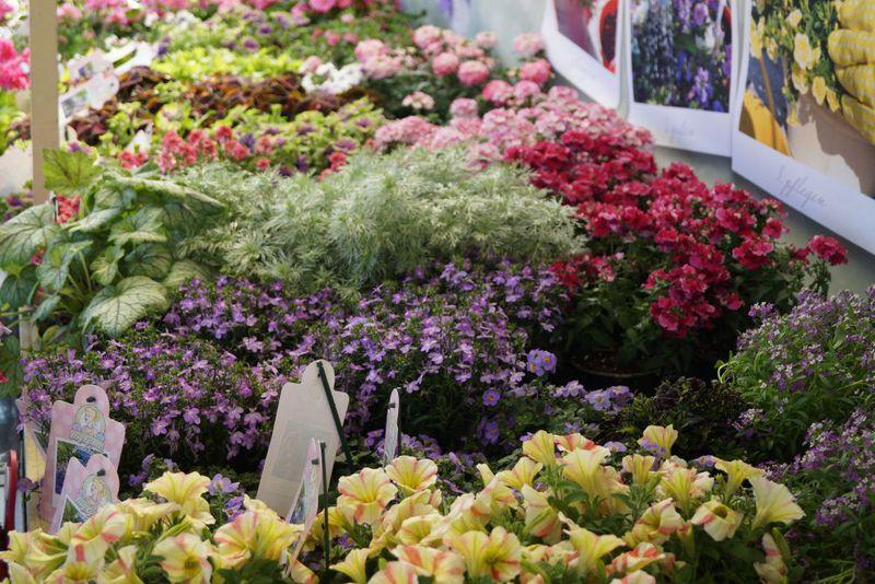 Fachtagung Beet Und Balkonpflanzen Flower Power Gabot De