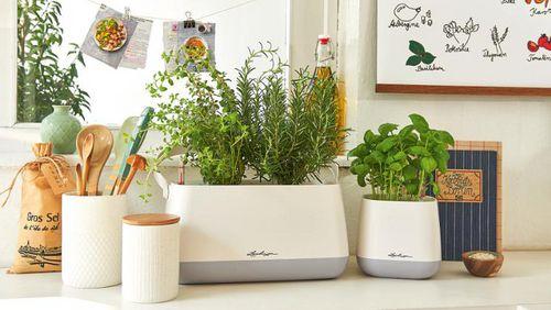 lechuza frische kr uter f r den sommer. Black Bedroom Furniture Sets. Home Design Ideas