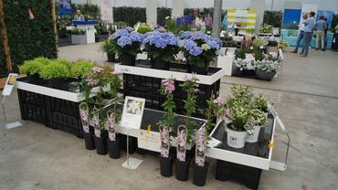 Impressionen von der Garden Trials and Trade 2019 in Hazerswoude-Dorp. Bild: GABOT.