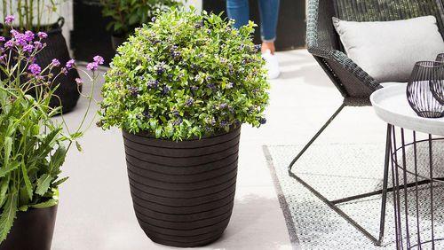zu jeddeloh pflanzen gr n trifft trend. Black Bedroom Furniture Sets. Home Design Ideas