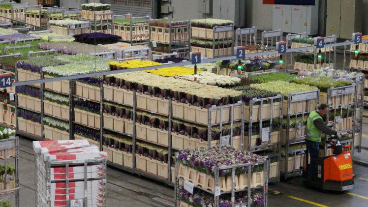 Royal FloraHolland in Aalsmeer. Bild: GABOT.