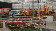 FlowerTrials 2017: Dümmen Orange in Naaldwijk.
