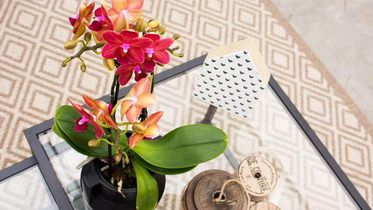 Orchid Inspiration Days: Inspirierendes Programm.