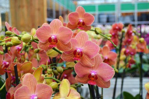 rosengut langerwisch orchideenwochen. Black Bedroom Furniture Sets. Home Design Ideas