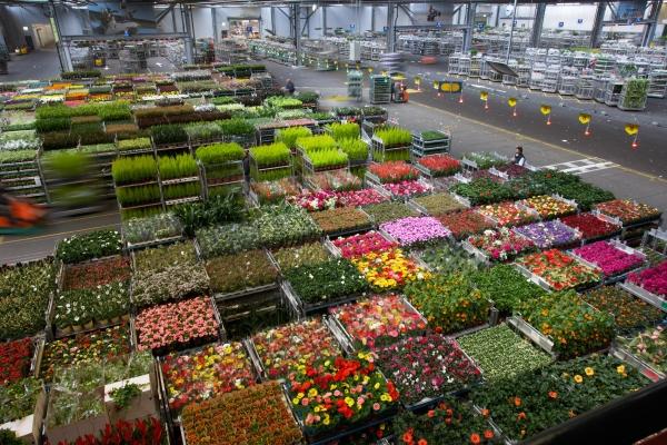 nl exportwert von blumen und pflanzen steigt im m rz. Black Bedroom Furniture Sets. Home Design Ideas