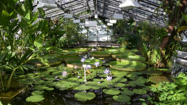 Botanischer Garten Berlin Victoriahaus Wieder Geöffnet Gabotde