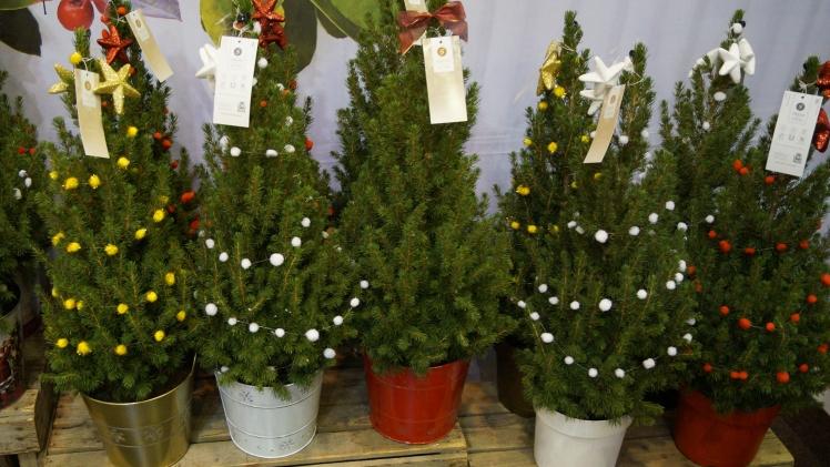 Weihnachtsbaum Im Topf Geschmückt.Trend Kleine Aber Feine Weihnachtsbäume Im Topf Gabot De